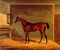 a bay racehorse in a stable by james (of bath) loder