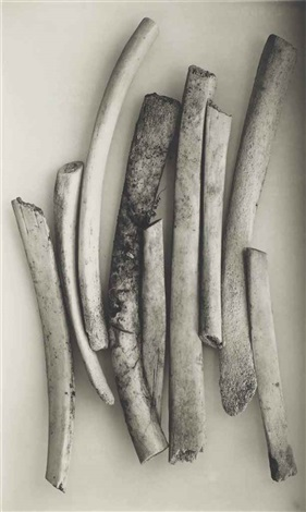 bird bones sweden by irving penn