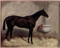 cheval à l'écurie by v.j. cotlisson