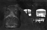 hippopotame (from the la salle des souvenirs series) by gladys