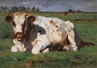 lying white cow by thomas herbst
