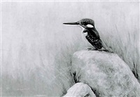 half-collared kingfisher (zimbabwe) by george morrison reid henry