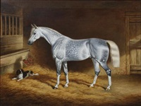 a dappled grey hunter and a spaniel in a stable by george jackson