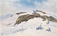 ptarmigan in the snow by george edward lodge