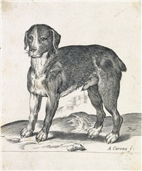 dog by agostino carracci