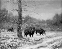 le sanglier sous la neige sortant du bois by couzy