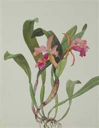 day joy orchid by andrey avinoff