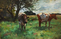 cows on the pasture by thomas herbst