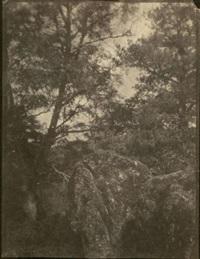 arbres et rocher (study) by charles edouard (baron de crespy) le prince