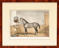 a portrait of the grey racehorse hockster in a stable by edwin (of bath) loder