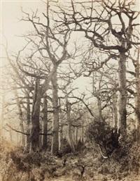 arbres en hiver (study) by eugène cuvelier