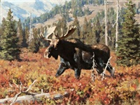 wyoming moose by tucker smith