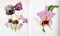 orchids by john l. macfarlane