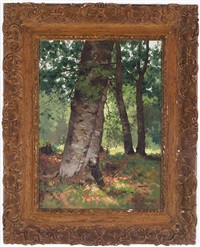 sunshine beyond the maine birches by charles frederick kimball
