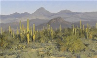 tonto forest vista by matt smith