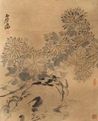 菊石图 by xu gu