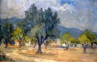 olive grove by stelios miliadis