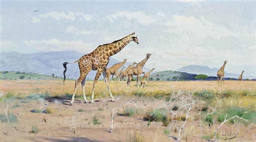 giraffes by wilhelm friedrich kuhnert