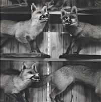 renards empaillés by joan fontcuberta