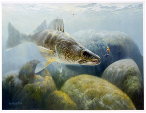 walleye shallow rock reef by larry tople