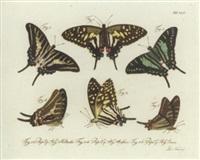 natursystem aller bekannten in- und ausländischen insecten by carl gustav jablonsky