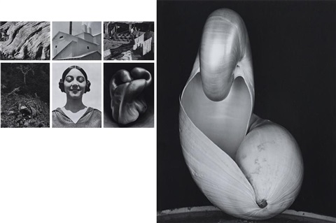 portfolio 9 works by edward weston