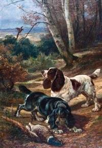 spaniels retrieving a pheasant by charles h.d. boland de spa
