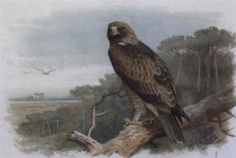 a golden eagle perched in an scots pine by archibald thorburn on artnet