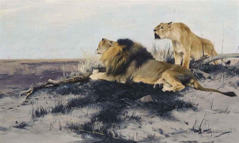 roaring lions by wilhelm friedrich kuhnert