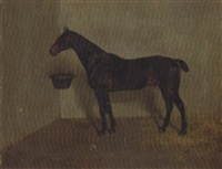 a dark brown hunter in a loose box by alfred grenfell haigh