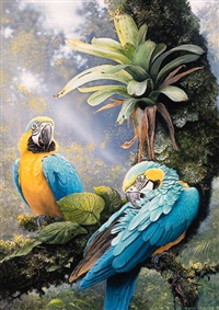 blue and yellow macaw by harro maass