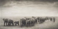 elephant journey to water, amboseli by nick brandt