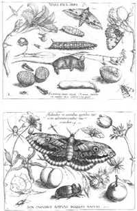 archetypla studiaque patris georgii hoefnagel ii by jacob hoefnagel