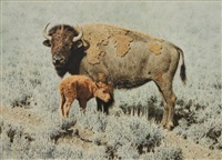buffalo cow and calf by tucker smith