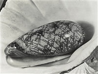 shell in shell by imogen cunningham