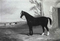 a black and white working horse by an open stable by f. c. freeman