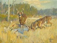 deer in field by frank b. hoffman