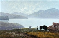a sheepdog herding sheep in the lake district by gerald coulson