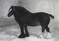 a dark, bay shire horse in a stable interior by frank babbage