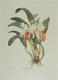 portraits of orchids (portfolio of 50) by andrey avinoff