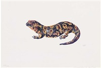 salamander; salamandra gallaica by denise weber