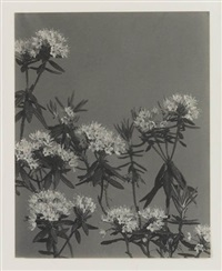 suite of 20 photographs (from wildflowers of new england) by edwin hale lincoln