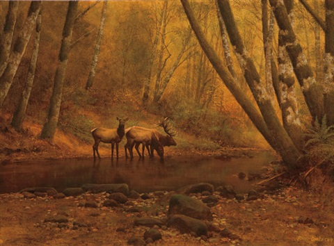 phantoms of the forest by roger cook