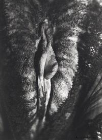 sans titre (from 2000 photos du sexe d'une femme) by henri maccheroni