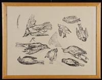 uccelli by oscar saccorotti