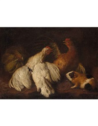 pollame, cavia e frutta by giovanni agostino (abate) cassana