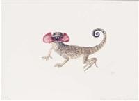 lizard; phrynocephalus mystaceus by denise weber