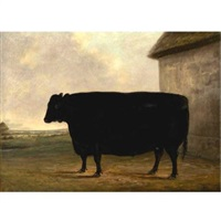 mr. mccombie's prize aberdeenshire ox by james blazeby