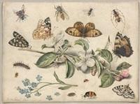 composition aux papillons et fleurs by jan van kessel