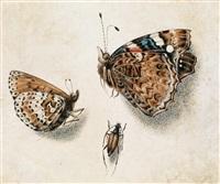 schmetterlinge und ein insekt / farfalla con insetto by giovanna garzoni
